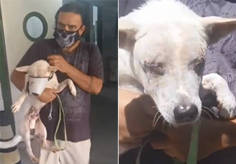 Cão que ficou cego após criminosamente tentarem arrancar os olhos tem alta e precisa de ajuda